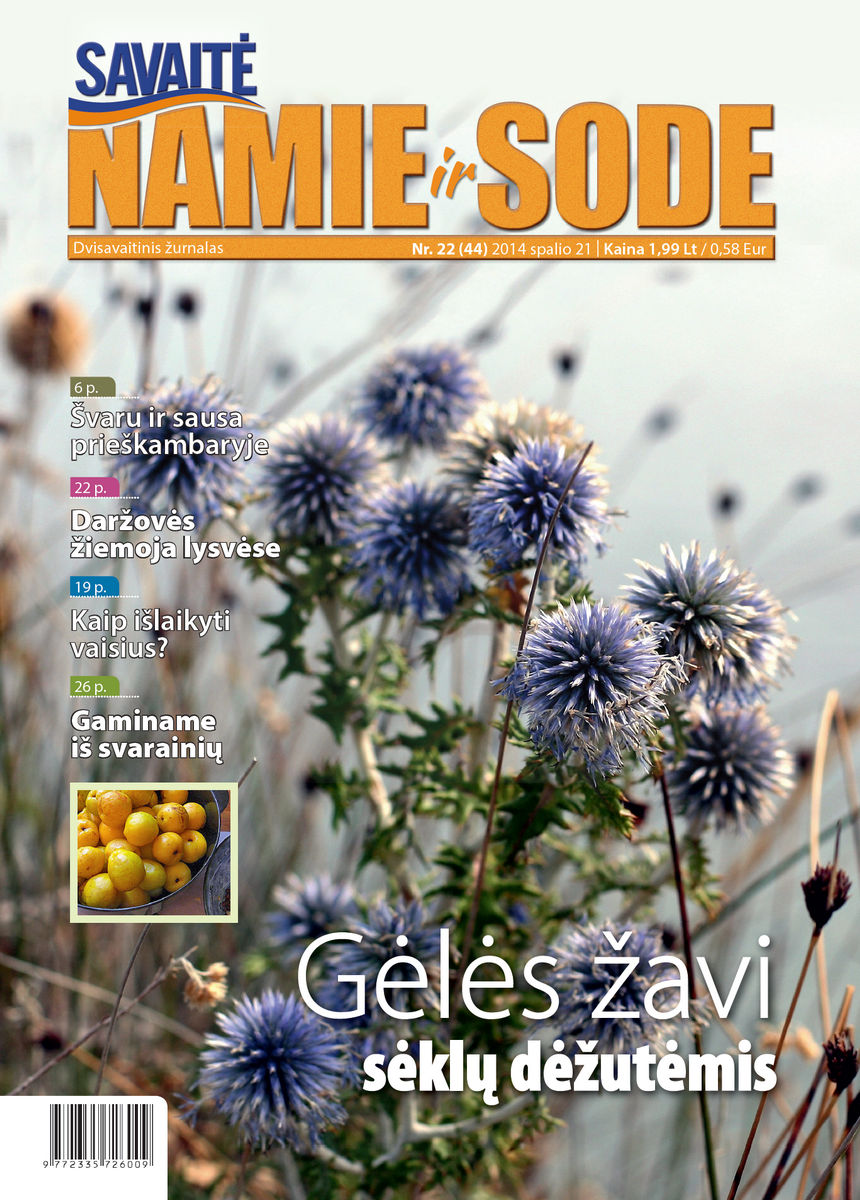 Namie Ir Sode 22 (2014)
